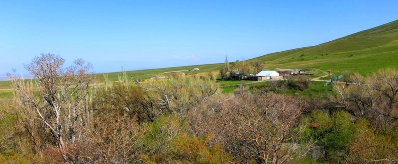 Berkara gorge, vicinity and tulips of Greigi.