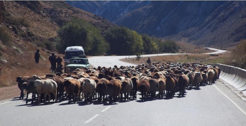 Период жайляу в горах Киргизии подошел к концу - наступила осень. В октябре начинается обратная кочевка пастухов с отарами овец.
