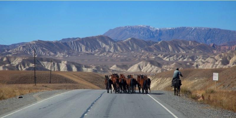 На всем протяжении нашего пути от поселка Кочкорка до Нарына по дороге дефилировали животные.