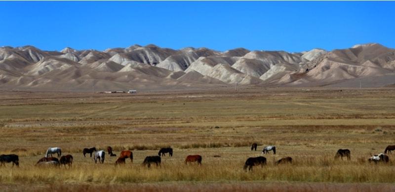 Скот главное достояние киргизов живущих в сельской местности. Нужно заметить, что скота в Киргизии много.