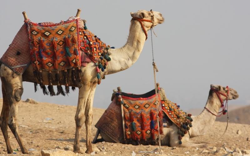 Приводились доводы и случаи, когда наивных туристов бедуины обманывали или просто увозили в пески и обращали в рабство.