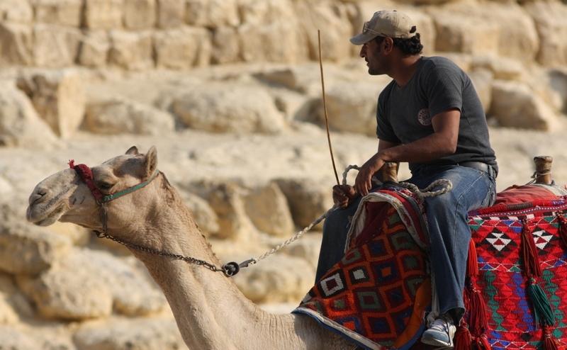 В окрестностях пирамид находится большое количество верблюдов с их седоками и поводырями, которые в разноголосицу предлагают прокатится на этих красивых и гордых животных.