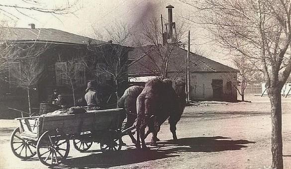 Повозка запряженная верблюдами на улицах Актюбинска.
