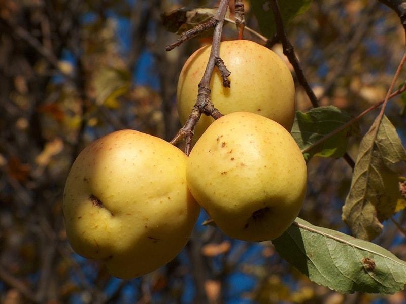 Лимонка.