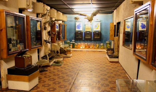 Зал природы Аральского  музея.