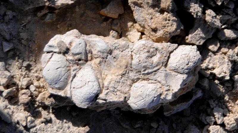 Western Kazakhstan paleontological.