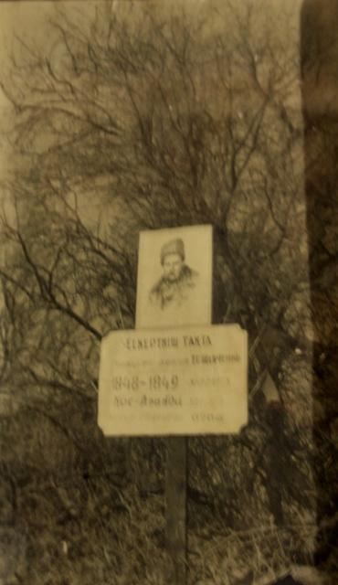 Дерево посаженное Тарасом Шевченко в Кос-Арале в период зимовки в 1848 по 1849 годы. Восточное Приаралье. Фотография из Аральского краеведческого музея.