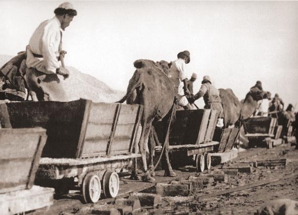 Вывоз руды из разреза. Фотография Д. П. Багаева.