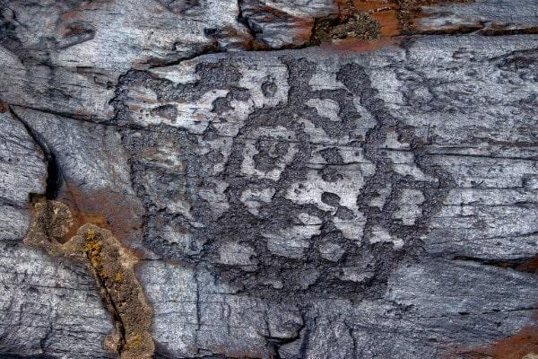 Sauiskandyk petroglyphs.