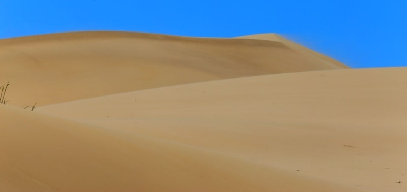 In the deserts in the Betpak-Dala.