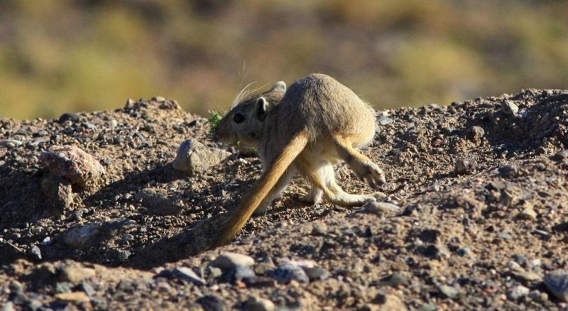 В пустынях Бетпак-Далы.