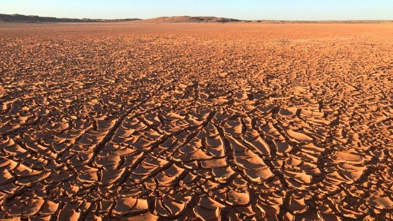 Природа пустынь Казахстана.