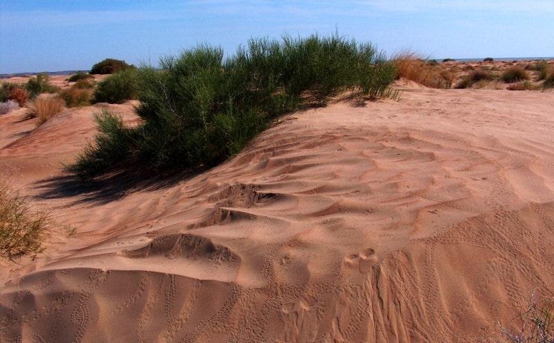 Sands Baskuduk and environs.
