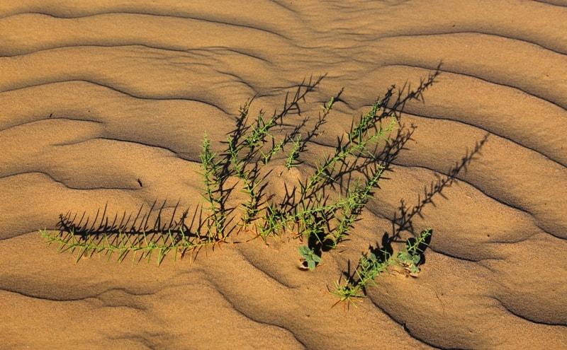 Пески Саускан.