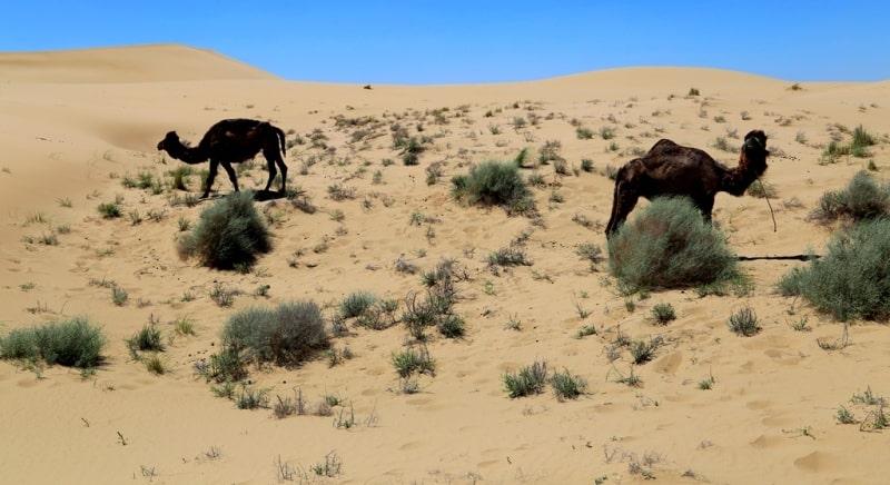 Sands Egizlak and environs.