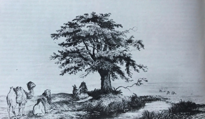 Священное дерево киргизов.
