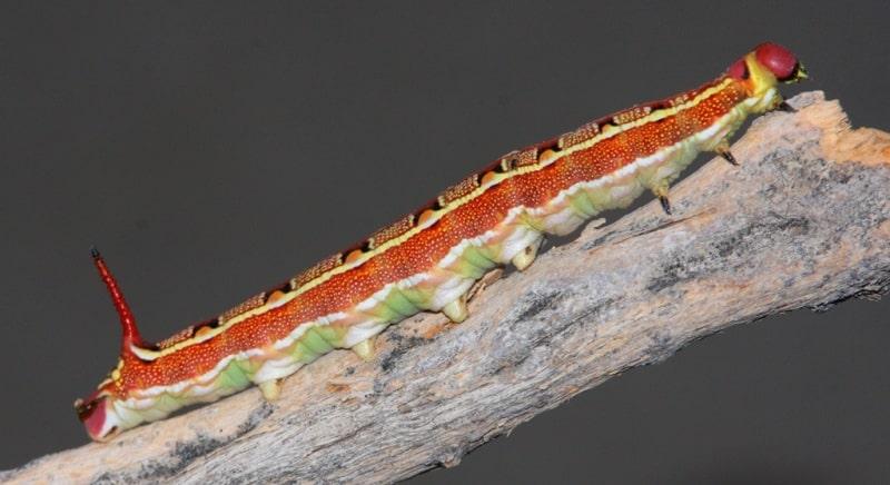 Fauna of Semirechye deserts.