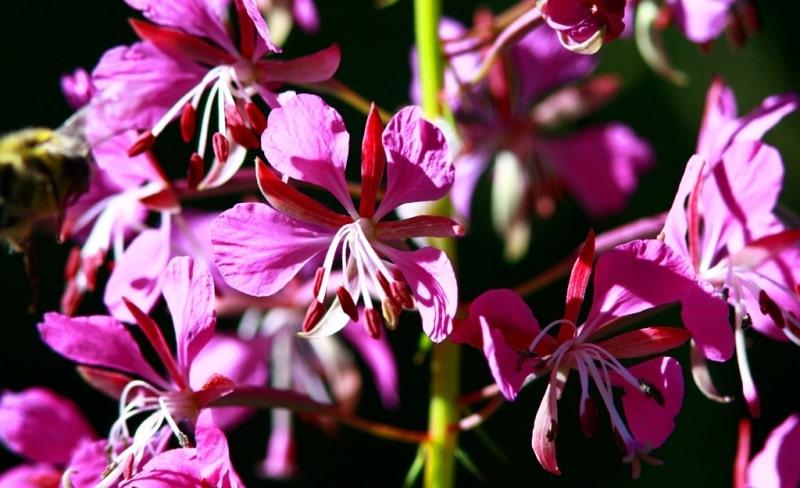 The flora of Zailiysky Alatau.