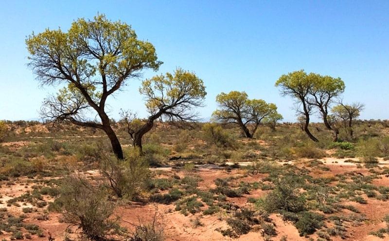 Flora of deserts Semirechye