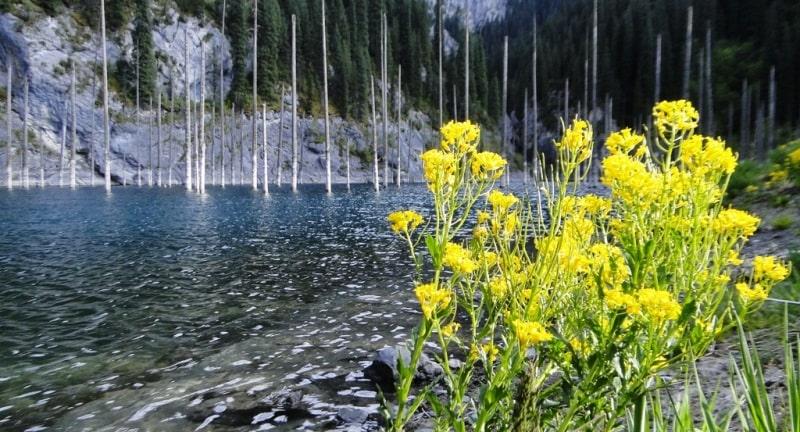 The Kaindy lake.