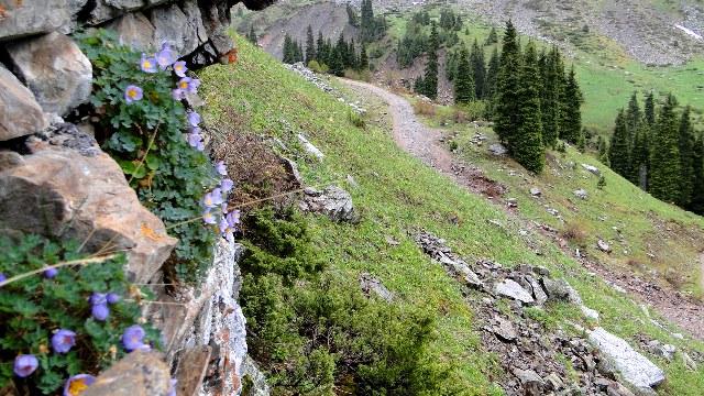 Дорога ведущая в урочище Мнжилки проходит через урочище Ворота Туюксу.