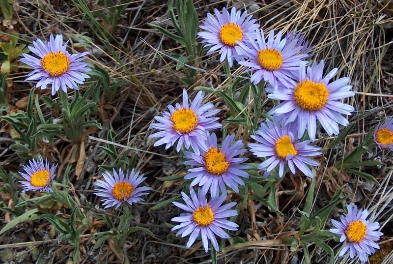 Flora of Dzungarskiy Ala-Tau.