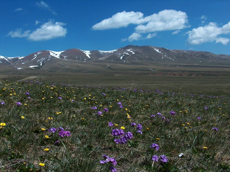 June flowers on plateau Assy.