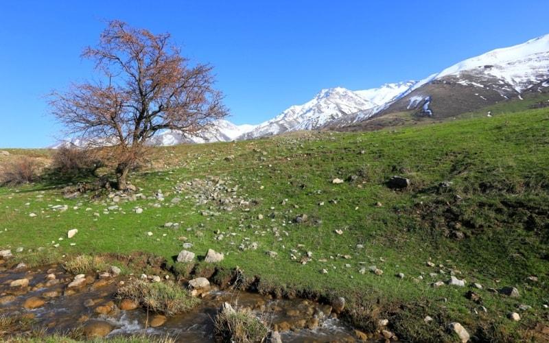 Talass Ala-Tau. Vicinities of reserve Aksu-Zhabagly.