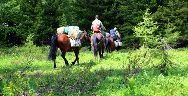 By horse riding in the Western Altai reserve.