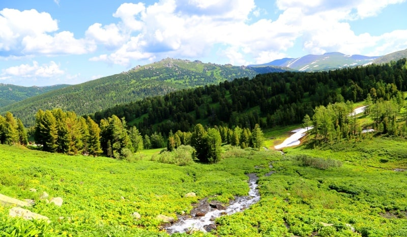 In the West Altai Reserve.