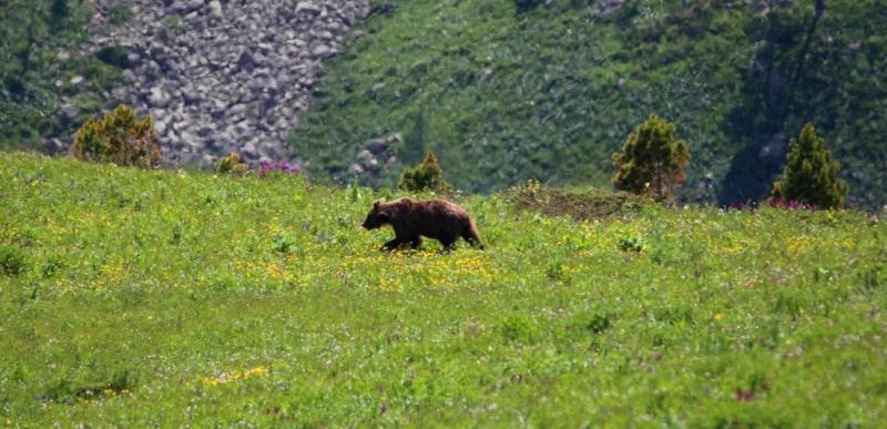 Встреча с медведем.