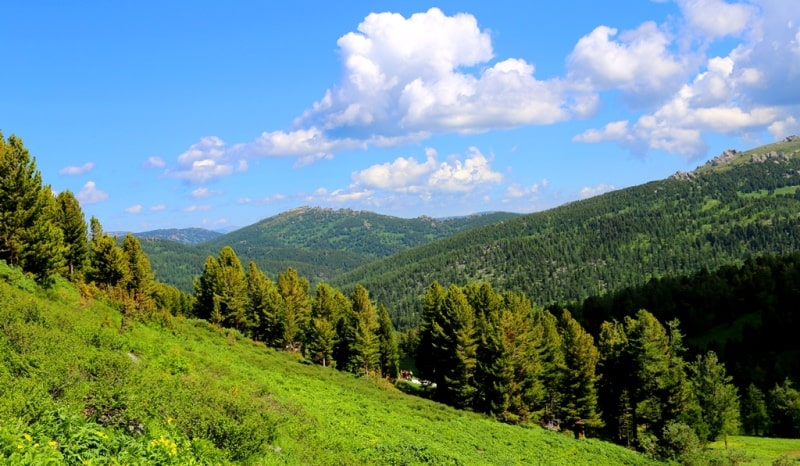 Nature of the West Altai Reserve.