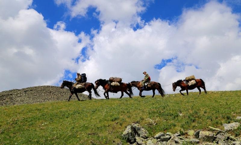 Поход на лошадях в Западно-Алтайском заповеднике.