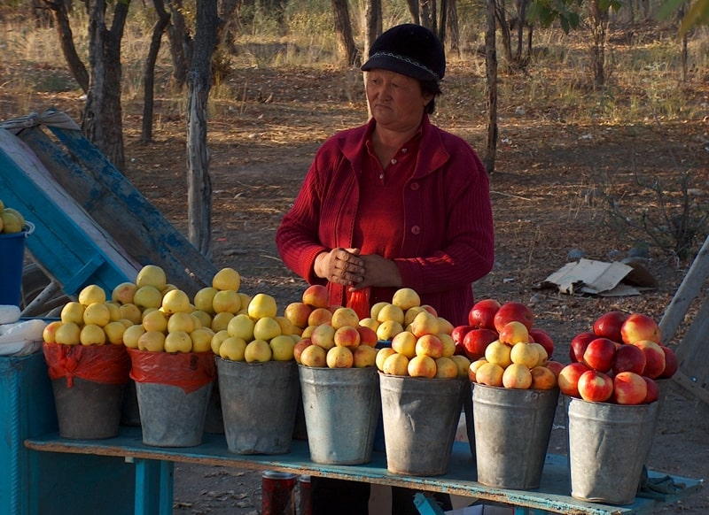 Apples of Kazakhstan.