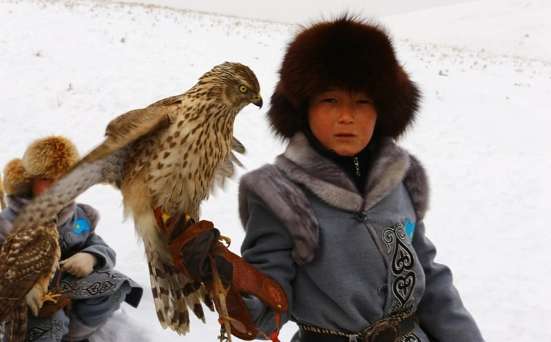Demonstration hunting with falcon in Kazakhstan.