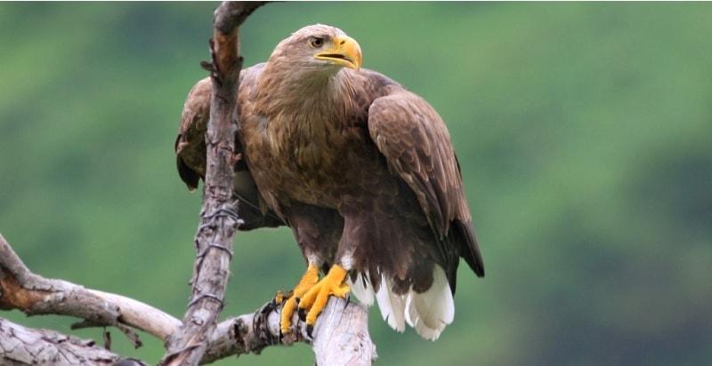 Шоу с хищными птицами в питомнике Сункар.