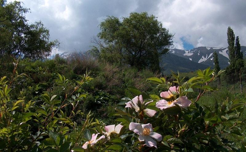 Gorge Kishi-Kaindy in Aksu-Zhabagly reserve.