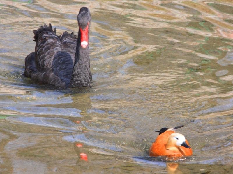 Birds on lake Alakol.