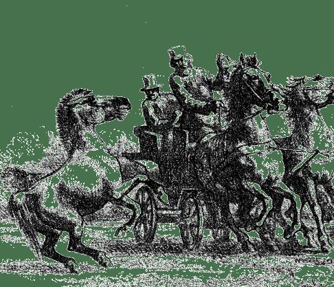 Дикая лошадь Пржевальского (Equus Przewalskii). С чучела в Санкт-Петербургском Зоологическом Музее.  Рисунок. А. Земцов, гравюра М. Рашевский.