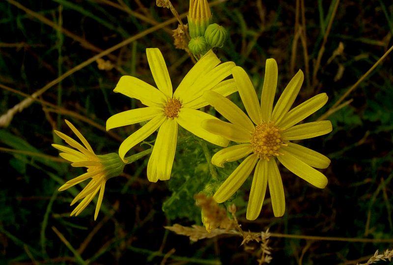 Flora of Bayanaul park.