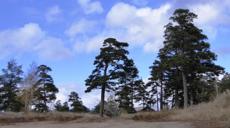 Sights national nature park of Borovoye.