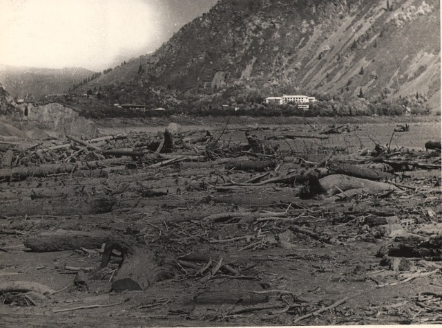 Trees brought on lake Issyk, during lodging on July, 7th, 1963, on the river Issyk.