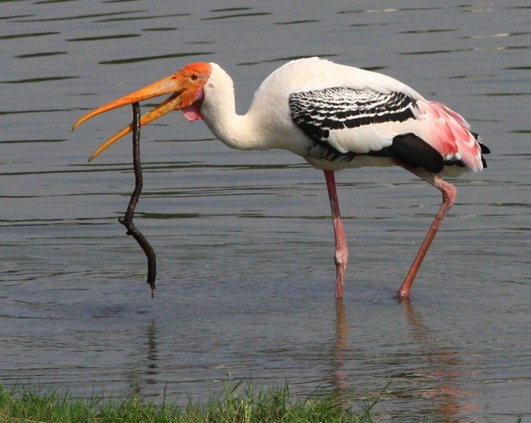 Животный мир Катон-Карагайского парка.