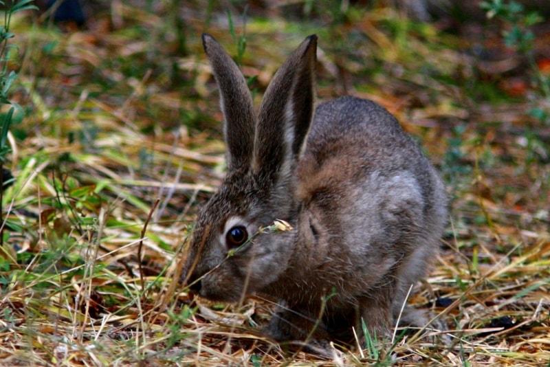Заяц в Катон-Карагайском национальном природном парке.