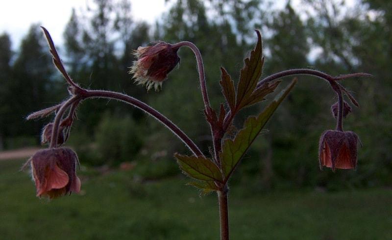 Flora of Katon-Karagay park.