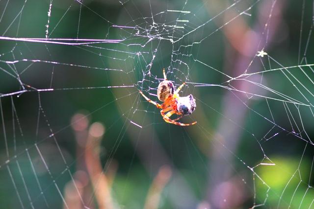 Вездесущие пауки.