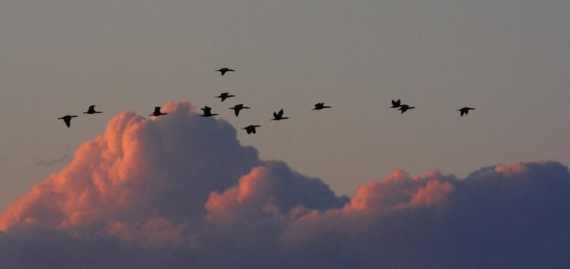 Миграция птиц.