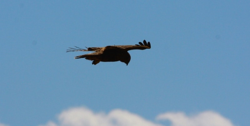 Fauna of West Altai Nature Reserve.