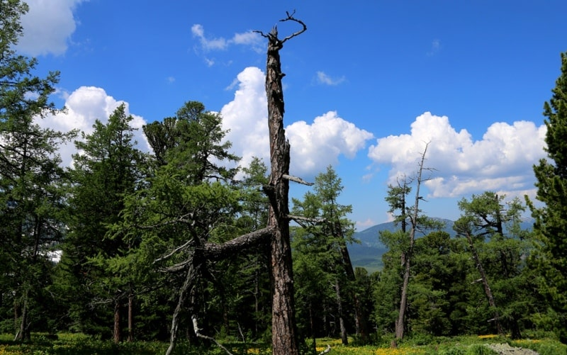 Environs of West Altai Nature Reserve.
