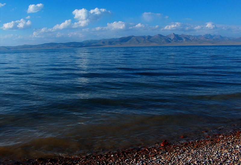 В озере водится несколько видов рыб.